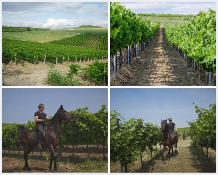 Buje – najizuzetnija lokacija vinograda za  stvaranje vrhunskih vinskih nijansa