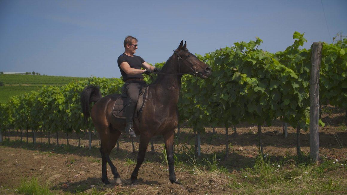 Buje – najpoznatije vinorodno područje Istre